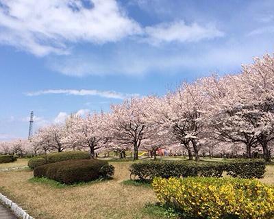 日本出国劳务办理