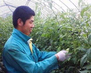 农业劳务项目
